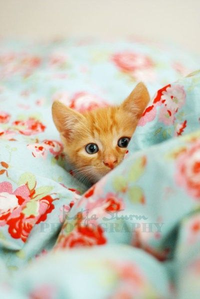 <3 <3: Cats, Kitty Cat, Cute Kitty, Cute Cat, Orange Kittens, Peekaboo, Orange Kitty, Peek A Boo, Animal