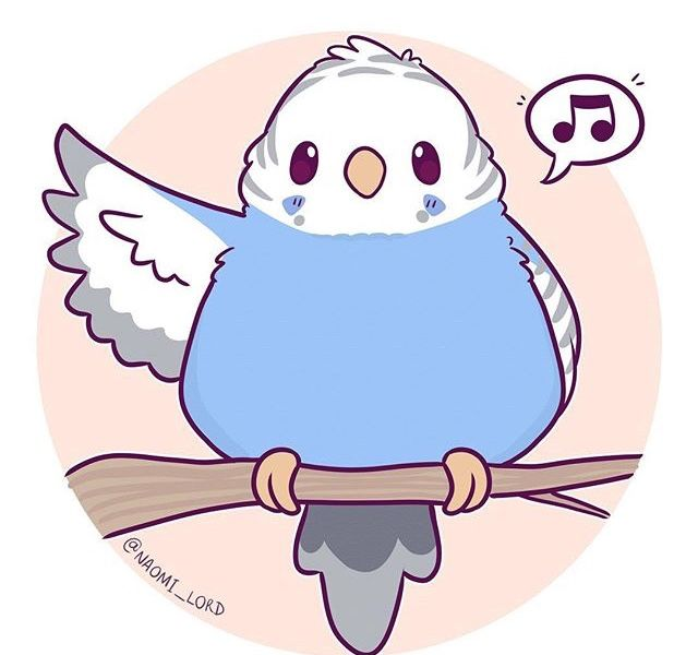 Parrot Fid Sing Song With Images Cute Doodles Cute Kawaii