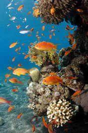 http://www.holidaycheck.de/reisetipp_bewertung-Sharm+Reisen+Sharm+el+Sheikh+Ausfluege+Schnuppertauchen+Schnorcheln+Boot+RasMohaP-ch_rt-id_360724.html