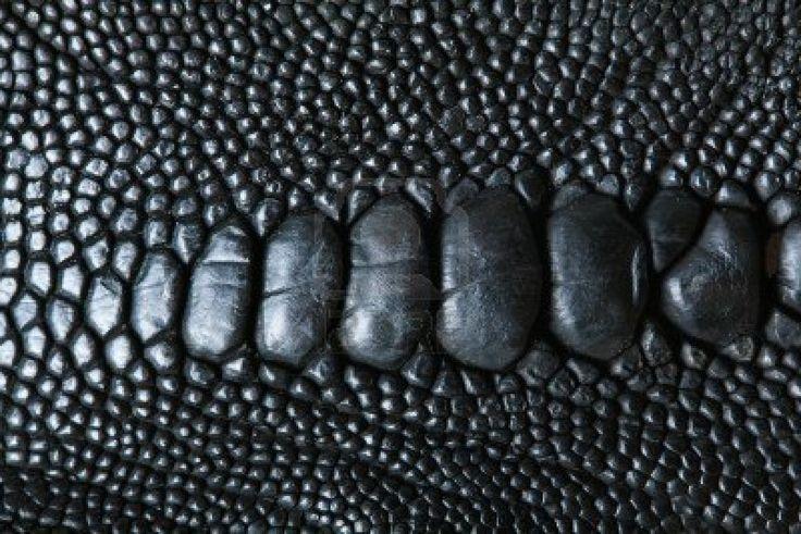 Skin, reptile, leathery, bumpy, black, texture ...