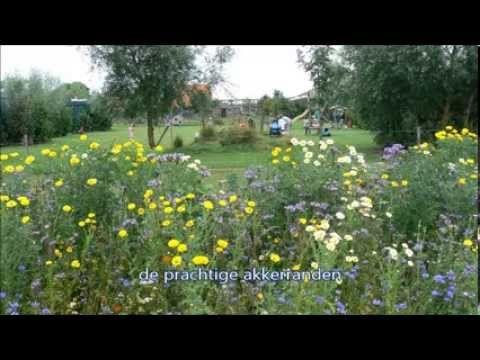 Nederland - Zuid-Holland- Nieuwerkerk a.d. ijssel - Boerenrust camping - kleine camping 8 plekjes, theetuin,