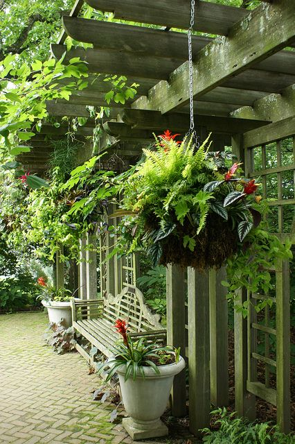 Flowers For Hanging Baskets In Part Shade : Best images about shade hanging baskets on