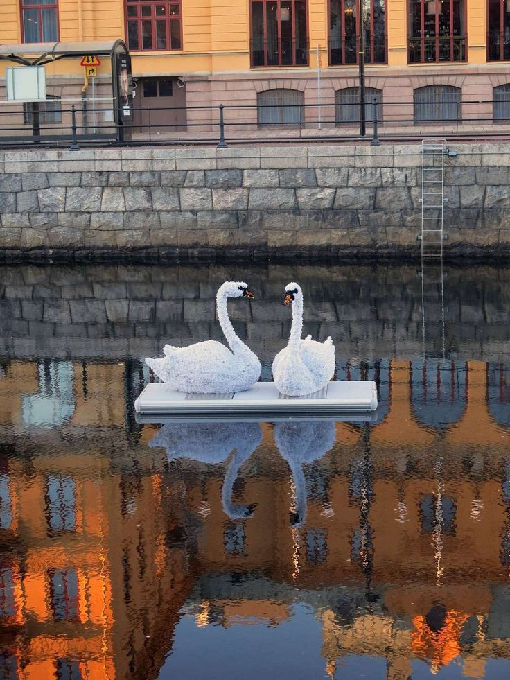 Glowing swans on the lake of Gävle will due for a cosy christmas ornament :)
