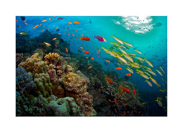 Great Barrier Reef : Photo Gallery : Animal Planet