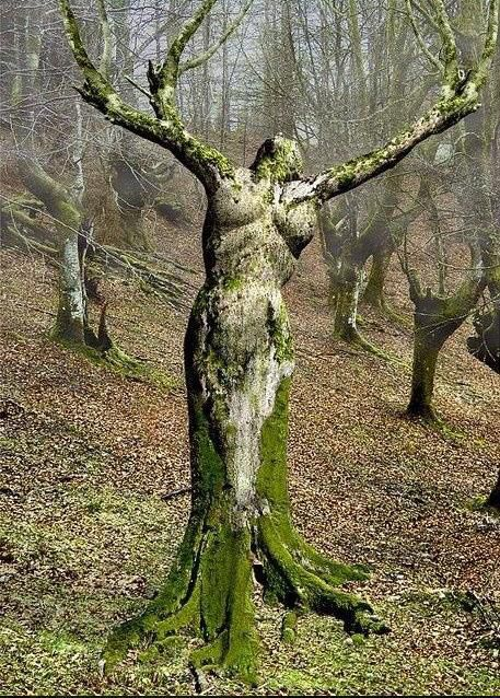 The woman of the forest - Scotland.