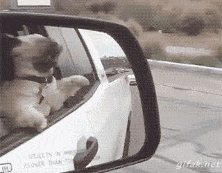 Objects in this week's best GIFs may appear more insane than they are. This dog is definitely losing his mind.