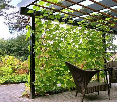 How do you ensure privacy in your garden? A veranda and higher bushes protect ag…