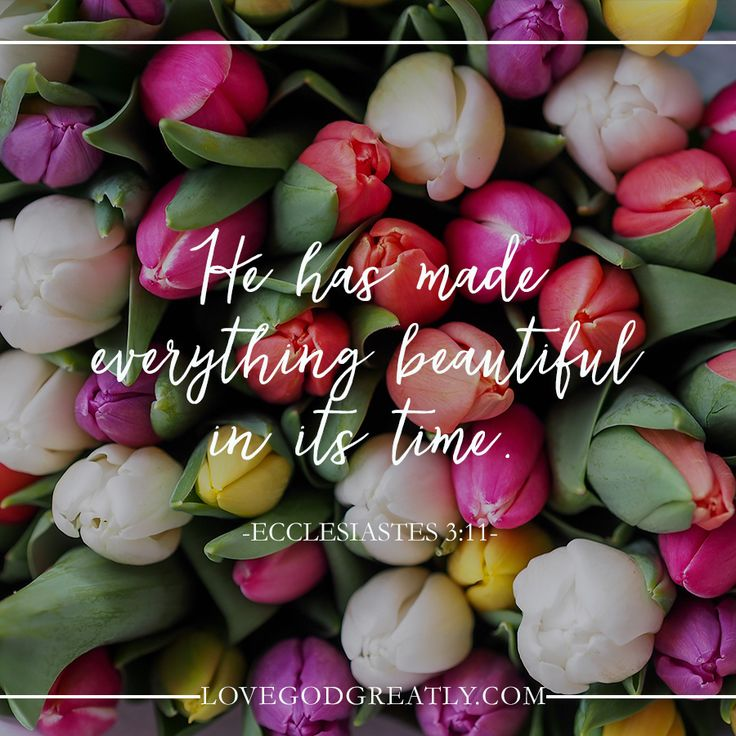 "Ecclesiastes 3:11 ""He has made everything beautiful in its time."" Week 3: Eternity in Their Hearts http://lovegodgreatly.com/eternity-in-their-hearts/"