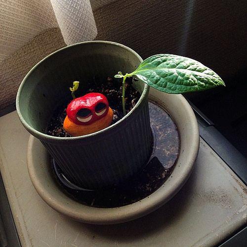 Growing up! #mizumushikun #funny #green #cute #alien #animal #nature