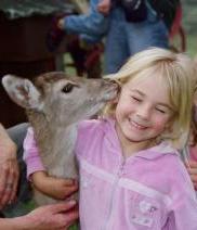 Whiti Farm Park - for Felix to meet some animals!