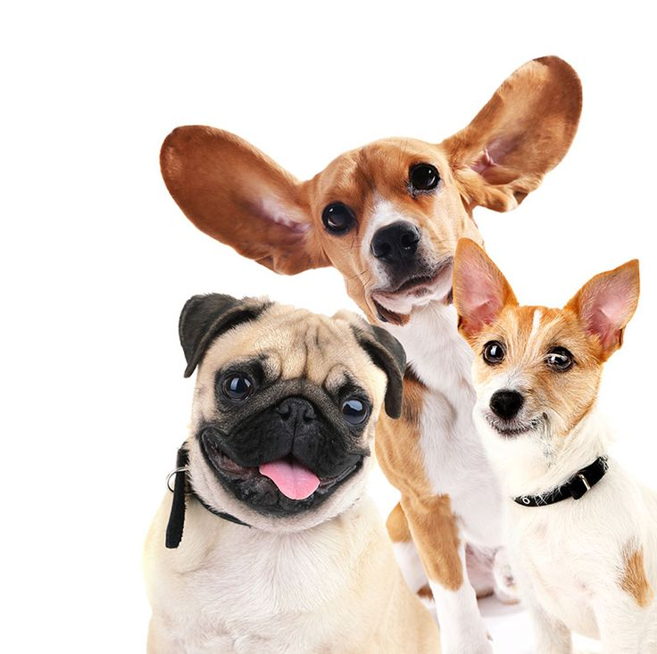 La Web de imágenes de animales domésticos