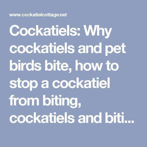 Cockatiels: Why cockatiels and pet birds bite, how to stop a cockatiel from biting, cockatiels and biting, why cockatiels bite, .