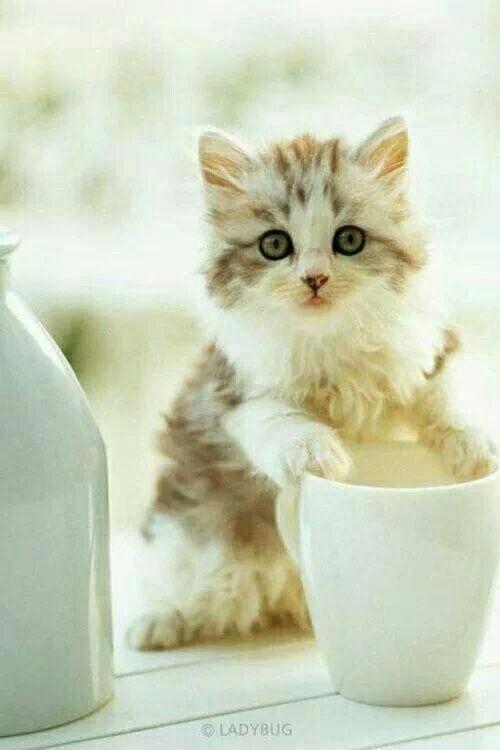 Cream in coffee yum. .....:)