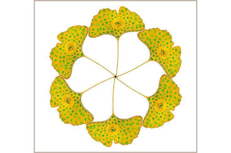 Ginkgo Lotus Flower