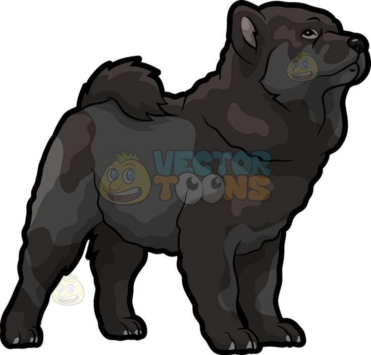 A beautiful jet black Chow Chow dog :  An adorable dog with thick black fur slightly lifts its head while observing something  The post A beautiful jet black Chow Chow dog appeared first on VectorToons.com.