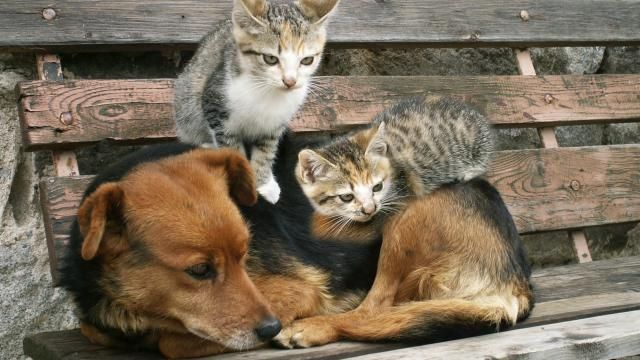 Studie toont aan dat katten 'beter' zijn dan honden   NU - Het laatste nieuws het eerst op NU.nl