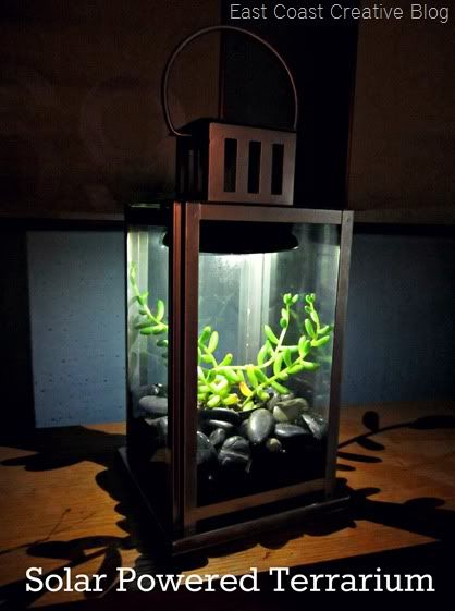 I am gonna make one of these this week!!! So pretty!   Solar powered lantern created to be a home terrarium