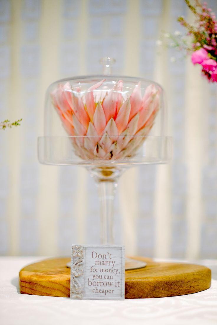 Beautiful Protea