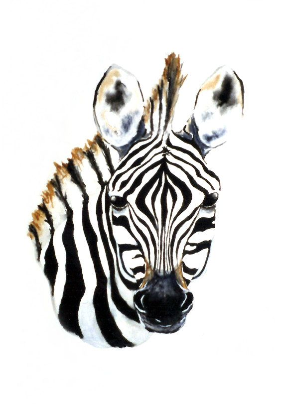 Zebra Foal Art Print African Wildlife Painting - 8x10 Print. $25.00, via Etsy.