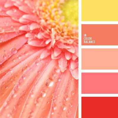 amarillo, color amarillo soleado, color calabaza, color salmón, color zanahoria, coral, coral y rosado, melocotón naranja, paleta de colores monocromática, paleta del color rosado monocromática, rosa anaranjado.