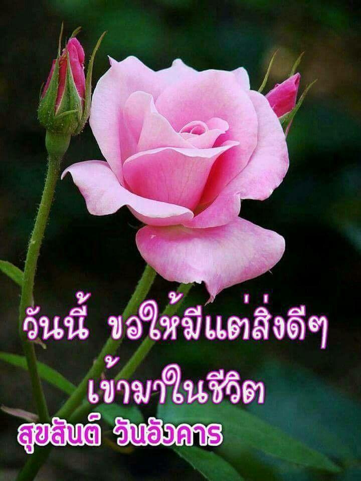 Good Morning Renforcé Linge De Lit 2 Pièces 155x220cm 80x80cm 5413-a emerged Pink