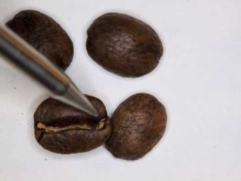 A great video from Sweet Maria's showing the various stages of roasted coffee.
