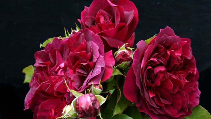 Roses 792