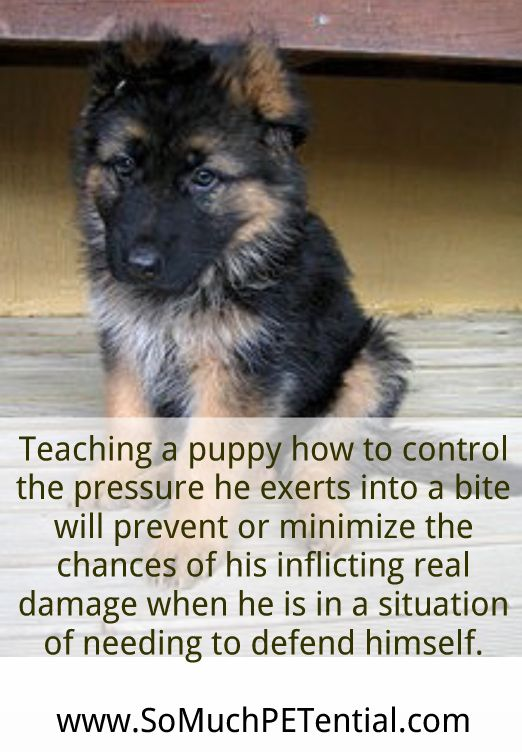 how to teach your dog to bite