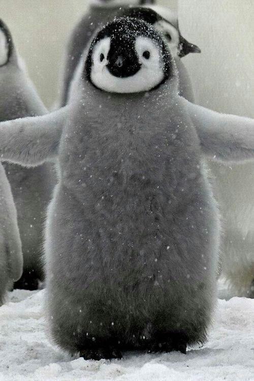 Adorable! Baby penguin <3