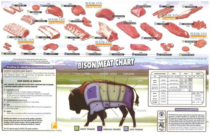 Bison meat cuts jeu sauvage et exotique pinterest