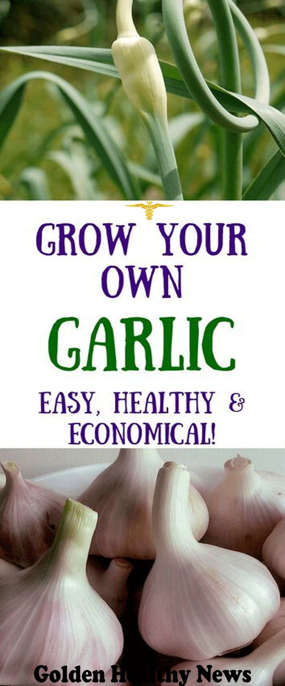 How to Grow Garlic (And Why Youd Want To!)