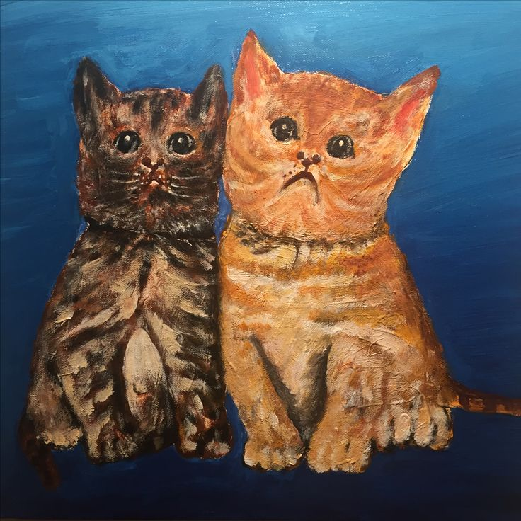 Grumpy cats Tao 2014