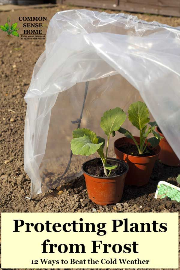 DIY cold weather protection for your garden in early spring and winter. Learn about cold frames, greenhouses, and other products; plus frost protection tips. #gardeningtips