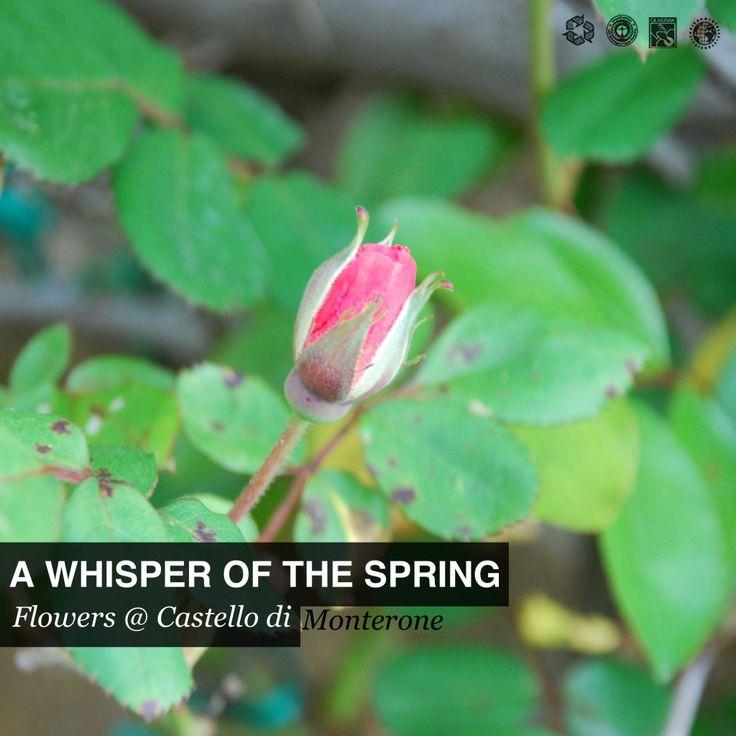 Blossom #graden #umbria