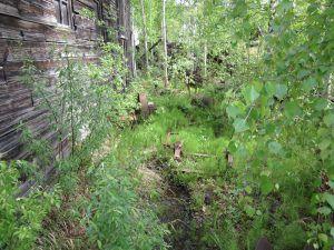maison abandonnée détruite par le givre à Dawson City