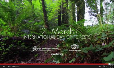 21st March - International Day of Forests