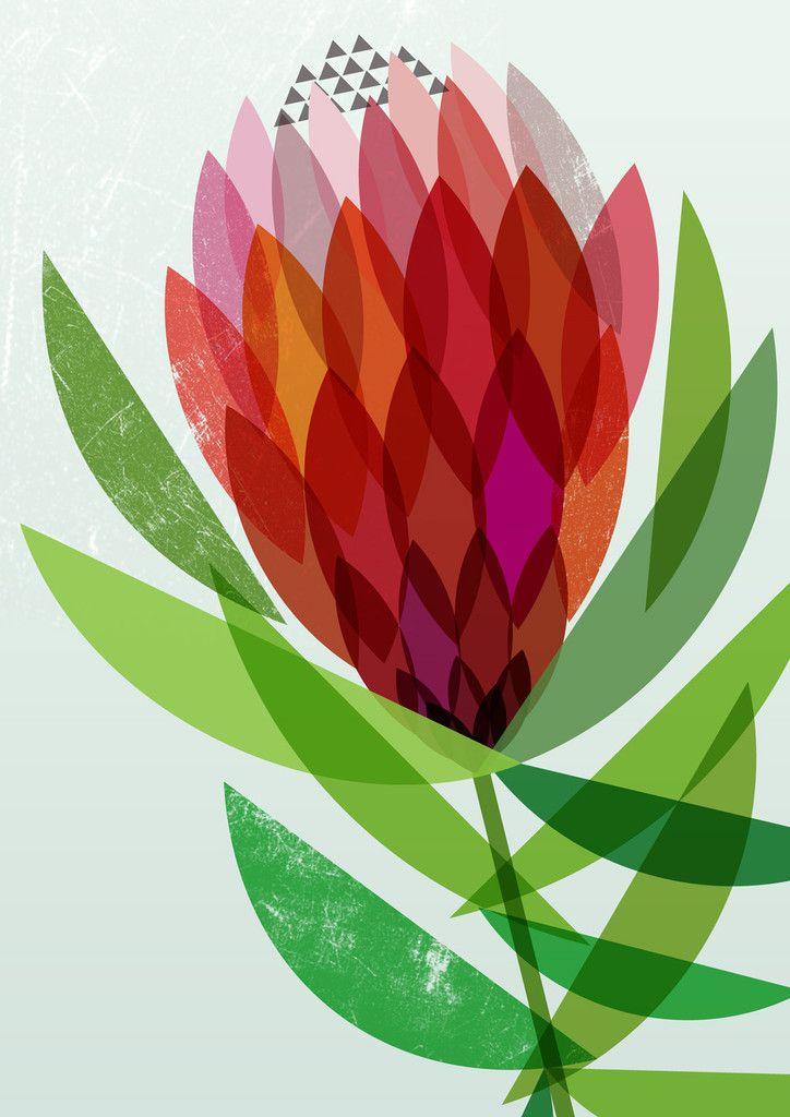 'Proteaflora' Artist Print  by Lara Cameron