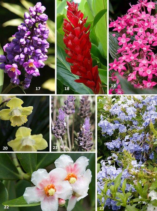 Flores Tropicais no Pinterest  Arranjos De Flores, Arranjos Florais e