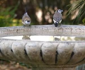 Concrete Bird Bath - Percita Dittmar