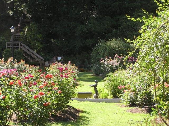 24 Best Rose Garden Wedding Images On Pinterest Backyard Weddings Garden Weddings And