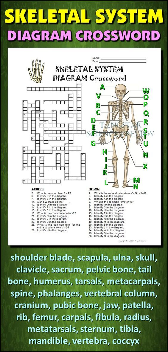 17 Best Images About Skeletal System On Pinterest