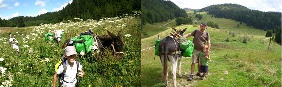 Te Voet | Wandelreizen en actieve vakanties FRANKRIJK | De groene Jura - gezinstocht met ezeltjes