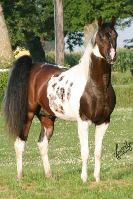 SS Painted Intimidator. I so want a horse like this