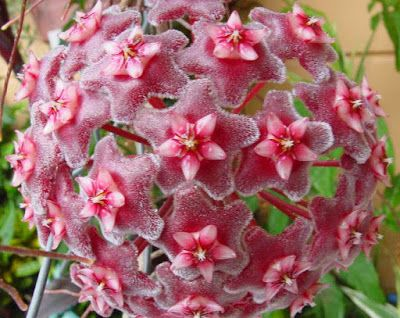 M s de 25 ideas incre bles sobre arbustos de hoja perenne for Ver fotos de arboles de hoja perenne