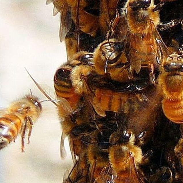 Simple How to Keep Bees Away Halten Bienen
