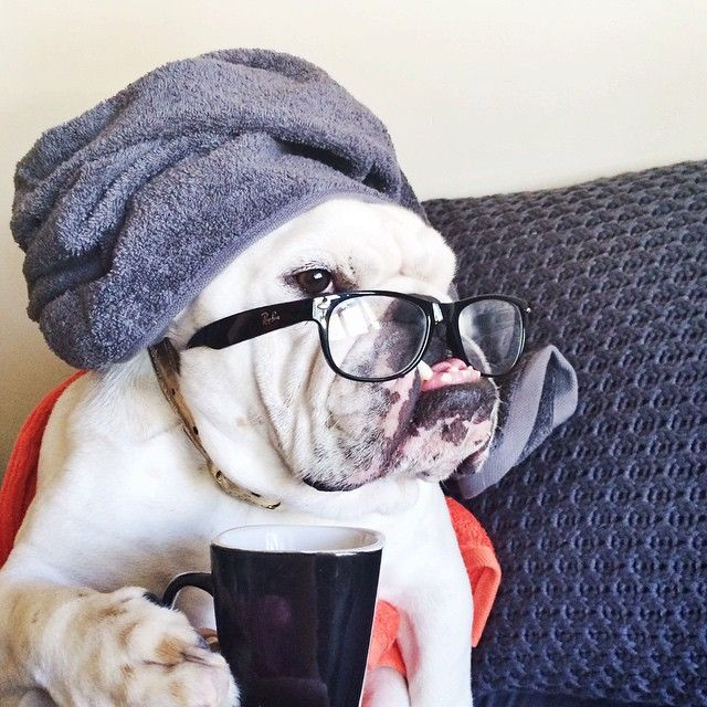 #Bulldog's cup of coffee in the morning :)