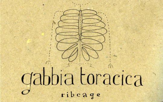 Gabbia Toracica Ribcage