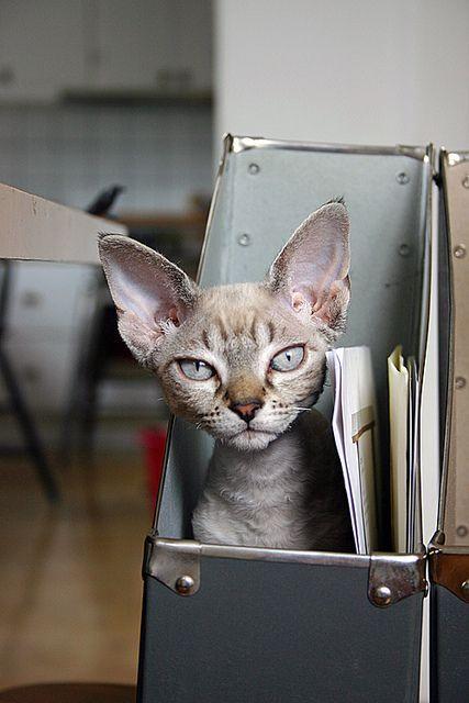 darling kitty #felines #cats #kittens #pets #animals