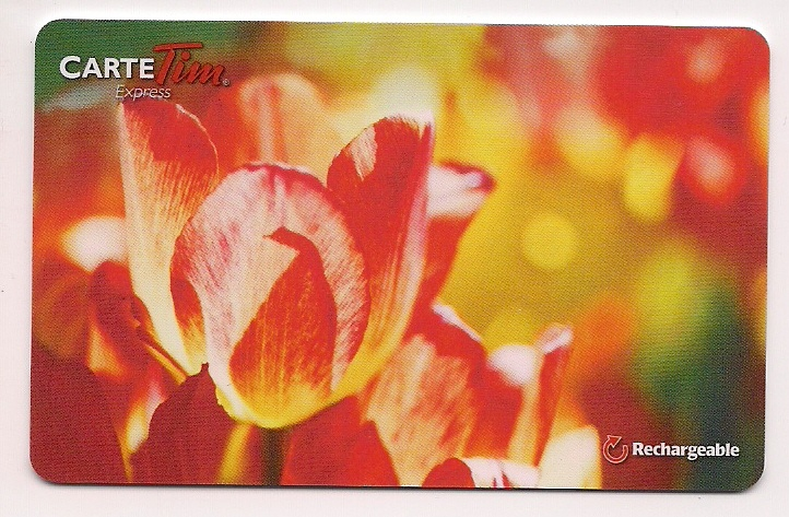 2013 - Tulips - French - #FD33515.