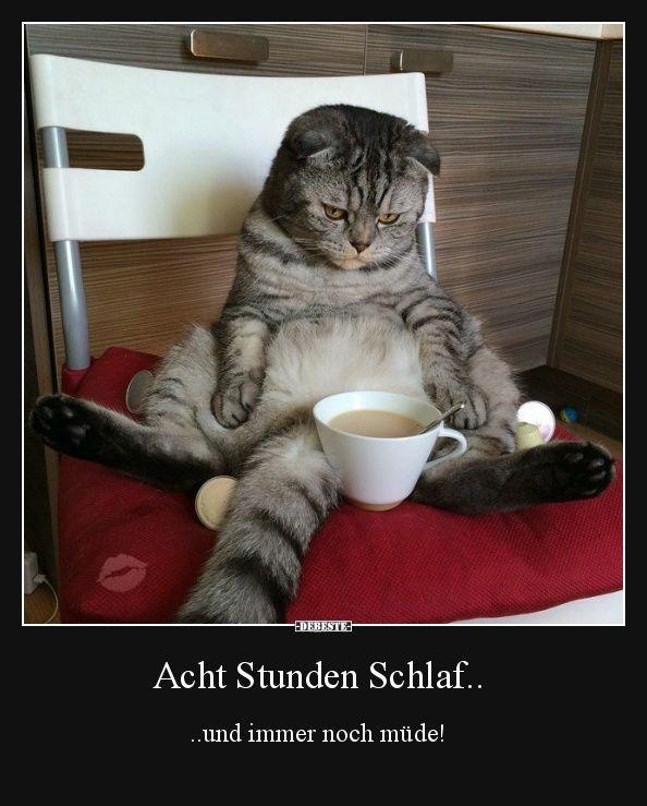 """Résultat de recherche d'images pour """"schlafen lustig"""""""